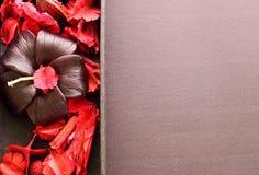 brunnsort för torr blomma för stearinljus set Royaltyfri Foto