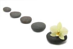 brunnsorten för bakgrundsblommaorchids stenar zen Royaltyfri Bild