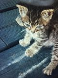 Bruno katten Arkivbild