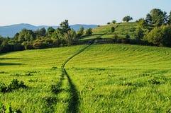 Brunst i gräset som växer till och med ängen Arkivfoton
