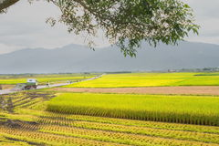 Brunswick Avenue. Taitung County is a rural road stock footage