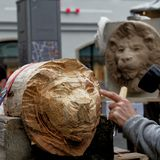 Brunswick, Lower Saxony, Germany, January 27,2018: Artist carves the head of a lion from a large piece of wood, the emblem of the. City of Brunswick Stock Image