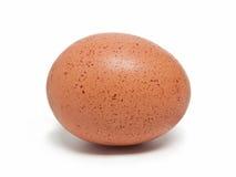 brunt ägg Arkivbilder