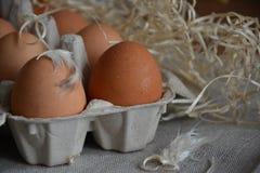 Brunt ägg i en ask Arkivfoto