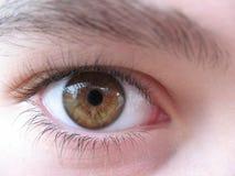 brunt öga royaltyfria bilder