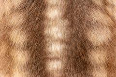 Brunt av djurhud och p?ls, yttersida av l?sa hjortar f?r designbakgrunden royaltyfri foto