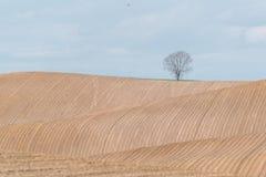 Brunt fält med rader Arkivfoton