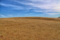 Brunt gräs- betar vid den blåa molniga himlen Royaltyfri Foto
