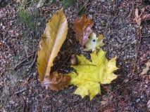 brunt gräs som beströs med färgrika höstsidor i Loiren arkivfoto