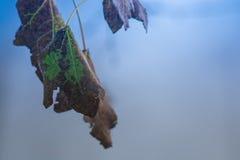 Brunt-gräsplan blad på ett träd i början av den December morgonen Arkivbilder