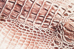 Brunt graderar exotisk bakgrund för makroen som utföra i relief under huden av en reptil, krokodilen Närbild för äktt läder för t Arkivfoton