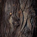Brunt hönaägg på ett trä Begrepp royaltyfria foton