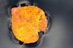 Brunt höstblad med regndroppar Royaltyfri Foto