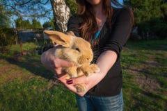 brunt kaninbarn Fotografering för Bildbyråer