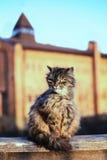 Brunt kattsammanträde på gatan mot bakgrunden av slotten Arkivfoton