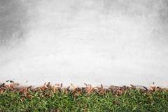 Brunt litet blad och grönt gräs med det gamla konkreta golvet i trädgård Royaltyfri Fotografi
