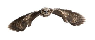 brunt owlståendeträ Royaltyfri Fotografi