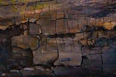 Brunt skäll av trädtexturbakgrund Arkivbild
