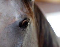 Brunt synar hästen Royaltyfri Foto