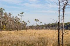 Brunt träskgräs och skog på Mackay Island Royaltyfri Fotografi
