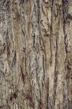 brunt treeskäll Royaltyfri Foto