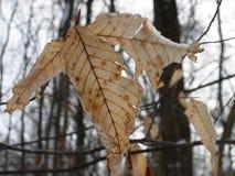 Brunt vinterblad royaltyfria foton
