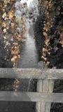Bruntblommor av en svart och ett White River Arkivbild