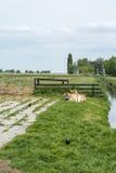 Bruntkor ligger i fältet Fotografering för Bildbyråer