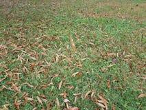 Bruntsidor på grönt gräs och ett sväva brunt blad royaltyfri foto