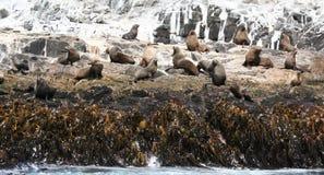 Bruny Island, Tasmania Royalty Free Stock Photos