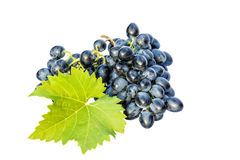 Brush of black grapes on a white background Royalty Free Stock Photography