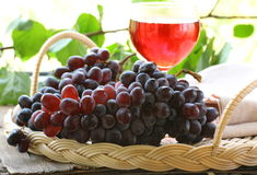 Brush of black organic grapes with leaves Royalty Free Stock Photography