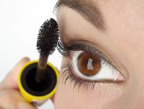 Brush for eyelash Stock Images
