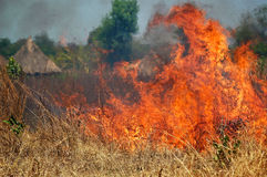 Brush Fire. An out of control brush fire in the bush of Africa royalty free stock photo