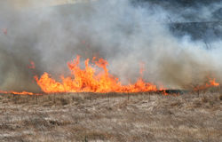 Brush fire. A brush fire climbing up a hill Royalty Free Stock Images