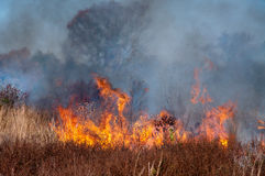 Brush fire. Fire burns through a prairie Stock Photography
