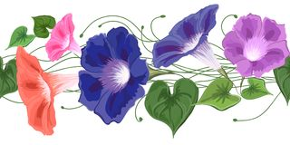 Brush Flower Bindweed bouquet climbing wavy bells, convolvulus. Bouquet climbing wavy bells, convolvulus, flowers blue, pink, purple and green leaves drawn in Stock Photo