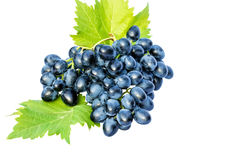 Brush of grapes on a white background Stock Photos