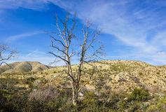 Brush Grows in Creosote Patch Royalty Free Stock Photo