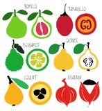 Brush Grunge Exotic Fruits Icons Set. Colorful brush grunge exotic fruits icons set: pomelo, tamarillo, bergamot, quince, loquat and guarana stock illustration