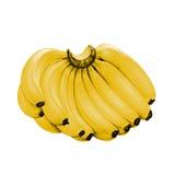Brush with juicy ripe bananas. Stock Photography