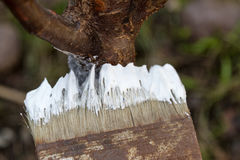 Brush and lime to apply mortar on wood. Brush and lime for applying mortar to a tree for processing in spring stock photos