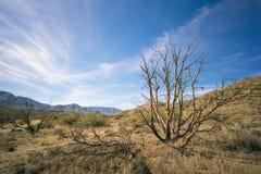 Brush in Mojave Desert Stock Images