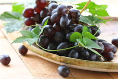 Brush of organic black grapes with  leaves Royalty Free Stock Image