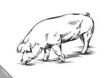 Brush painting ink draw pig illustration Royalty Free Stock Photo