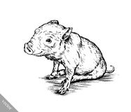 Brush painting ink draw pig illustration Royalty Free Stock Image