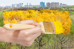 Brush paints yellow foliage on green summer trees Royalty Free Stock Photos