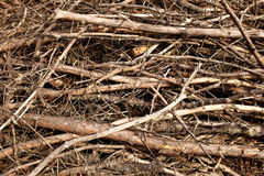Brush pile background Royalty Free Stock Photo