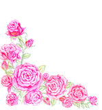Brush of pinkish red roses flowers royalty free illustration