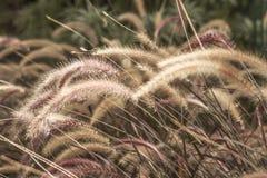 Brush plant Stock Images